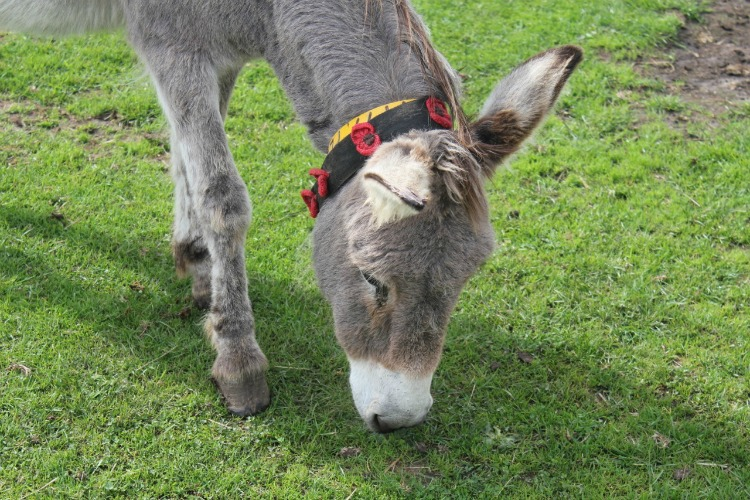 Poppy the donkey. Almost as cute as our cat Poppy!